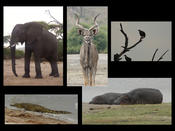 Chobe Nationalpark