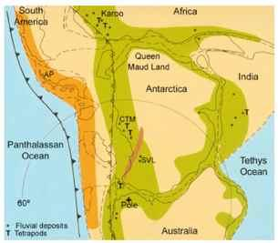 Shows principal basins on Gondwana and locations for fluvial deposits and their relations with the Tetrapodos migration.