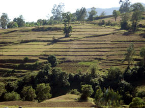 Constructed terraces to conserve soil and water in the Gina River catchment