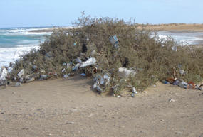 Waste at a beach in southern Egypt