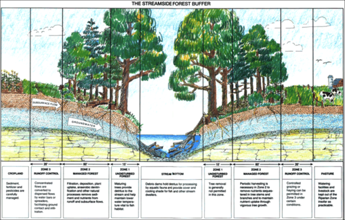 Streamside buffer zones of different functionality