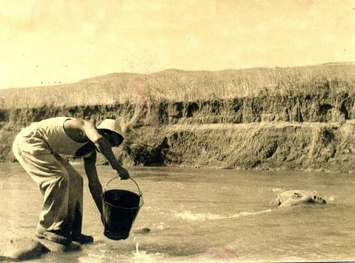 Draw drinking water in the river (Livni 1947)