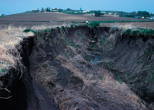 Gully erosion in western Iowa, USA.